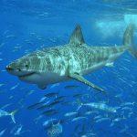 Der weiße Hai – kein Film, sondern Realität!